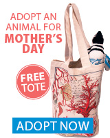 Mother's Day Adopt an Animal