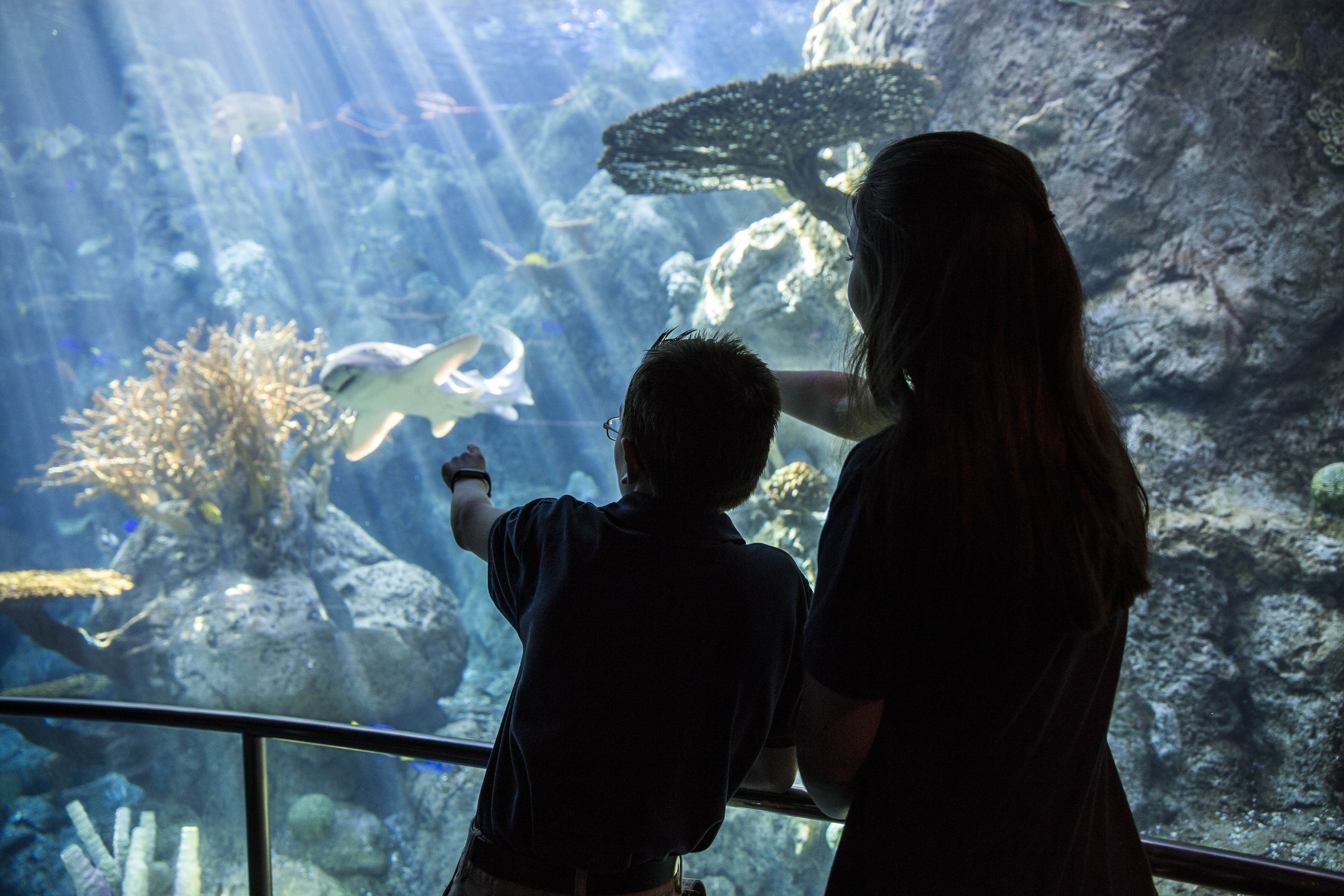 Hannah and Ben point to a zebra shark