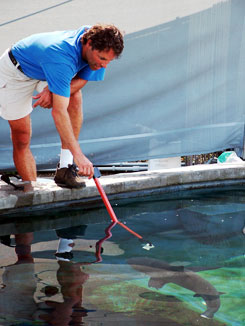 Steve feeding a blacktip