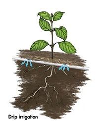 Drip Irrigation drawing