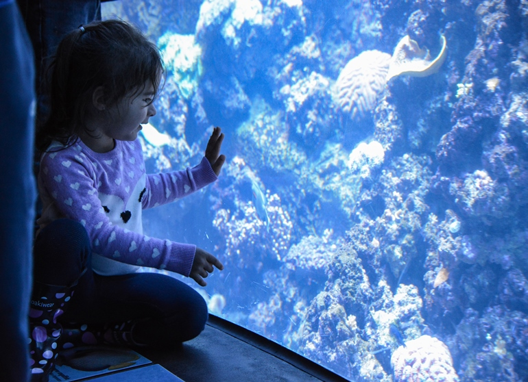 Aquarium Offers New Class for Parents and Children, Ages 2 to 6
