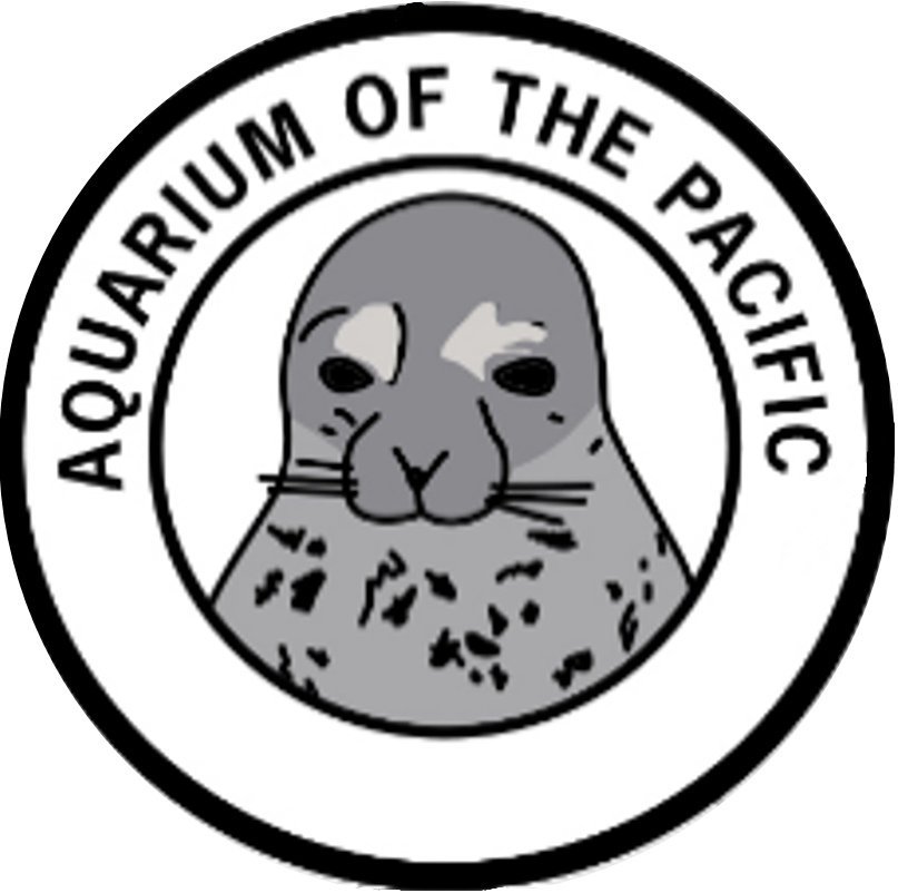 Harbor seal patch