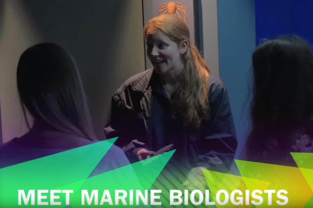 Meet A Marine Biologist
