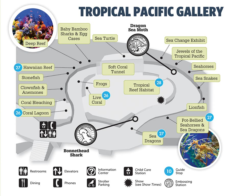 Aquarium of the pacific tropical pacific gallery Directions to aquarium