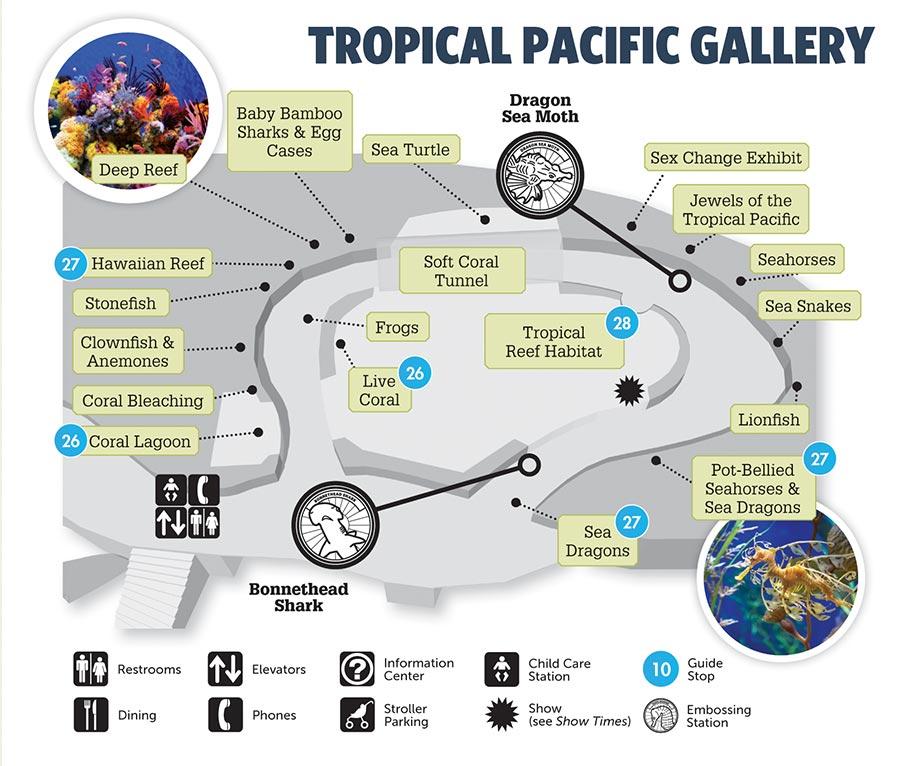 The 16 Exhibits In Aquarium S Tropical Pacific Gallery Represent