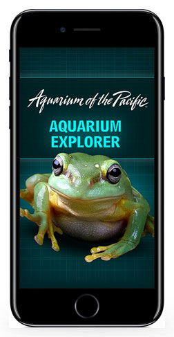 Aquarium Explorer Splash Screen