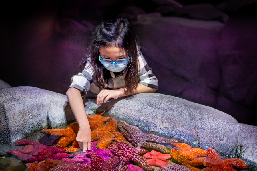 Girl at Northern Touch Lab discovering sea stars