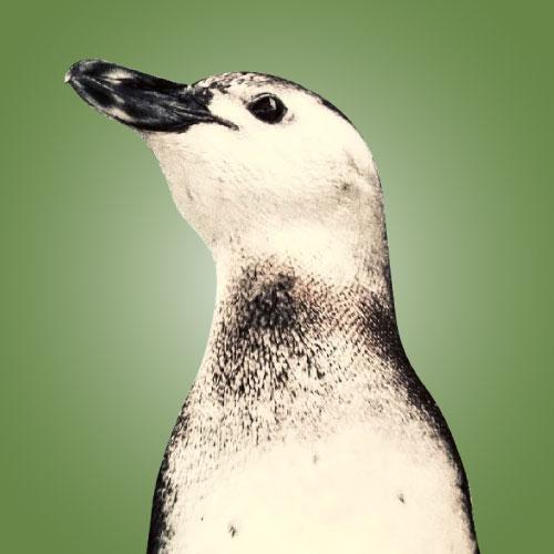 aquarium of the pacific june keyes penguin habitat fisher