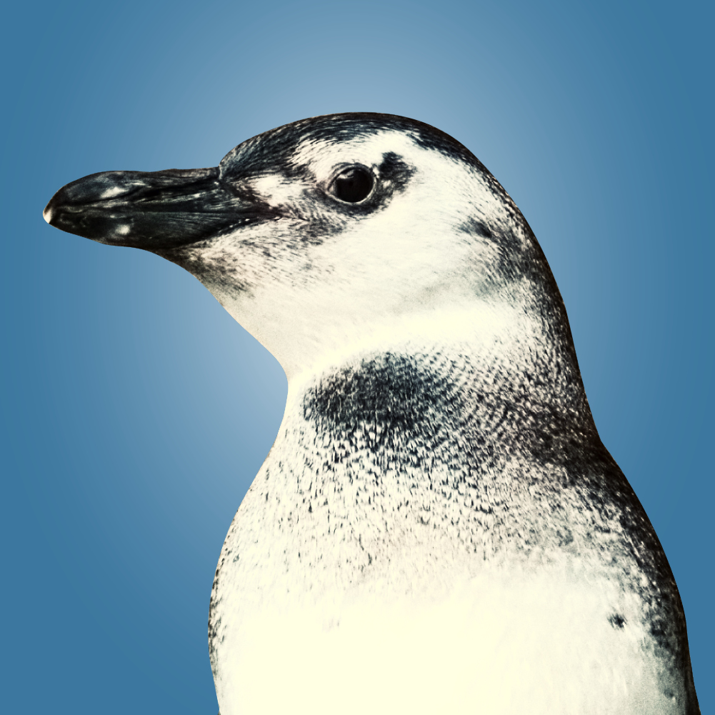 Gatz (Magellanic penguin) headshot