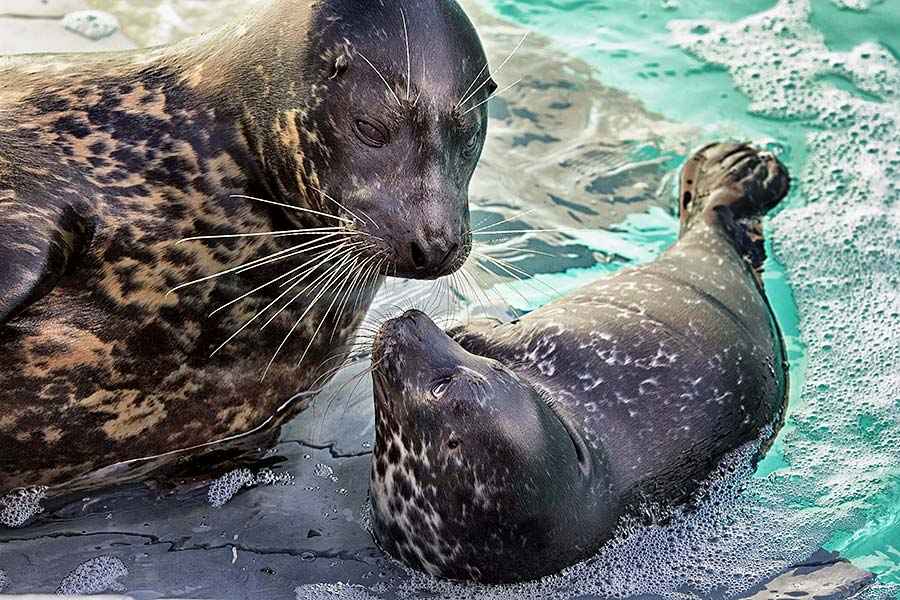 Seal and pup