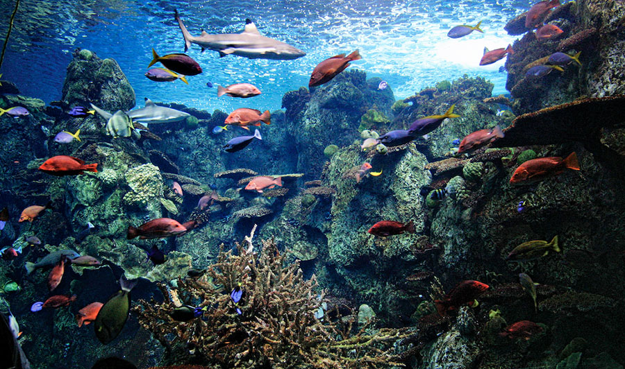 Many colored fish and shark in a tank