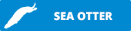 adopt a sea otter button