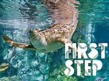 first step sea turtle