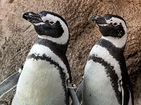 Links to Aquarium Exploration: Birds- From Penguins to Puffins