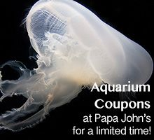 Aquarium coupons at Papa John's for a limited time!