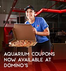 Aquarium Coupons Now Available at Domino's
