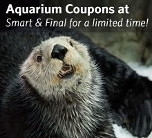 Aquarium coupons at Smart & Final for a limited time!