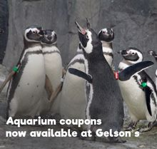 Penguin Gelson's global ad - 220 pixels links to Gelson's 220 global ad