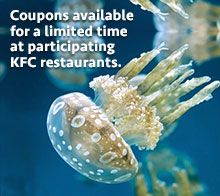Lagoon jelly with KFC ad