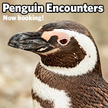 Penguin encounters now booking