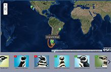 Magellanic Penguin Story Map