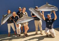 5 Things to Know About the Vaquita