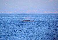 Still Time To See The Gray Whales