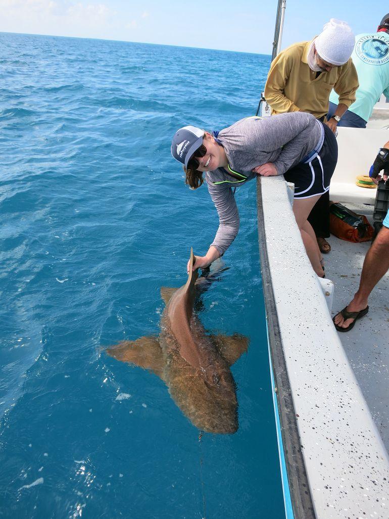 Shark Conservation in Belize