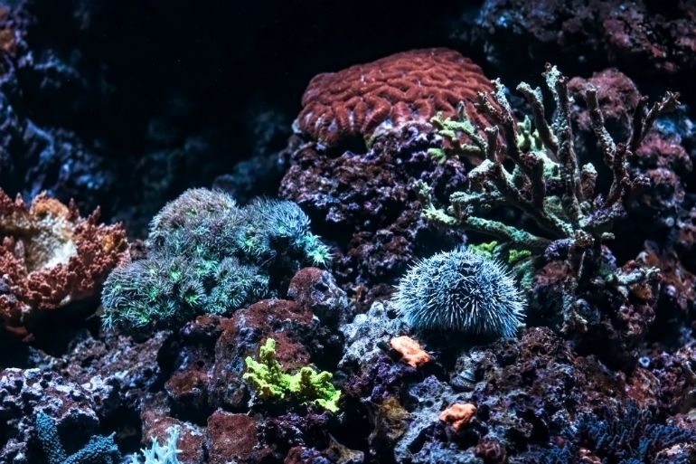 Brightly colored corals - lightbox