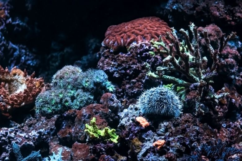 Brightly colored corals - popup