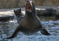 Sea Lions Versus Seals