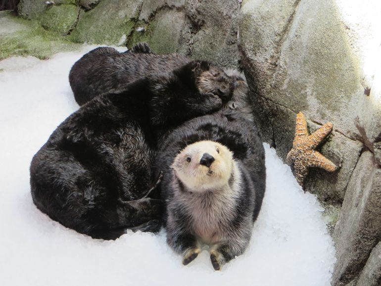 """OTTER-LY"" CUTE"