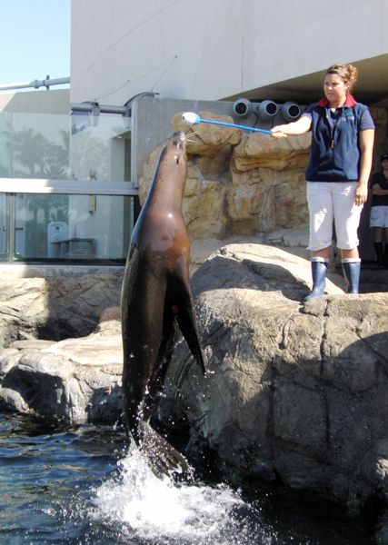 SEA LION HIGH ENERGY BEHAVIORS