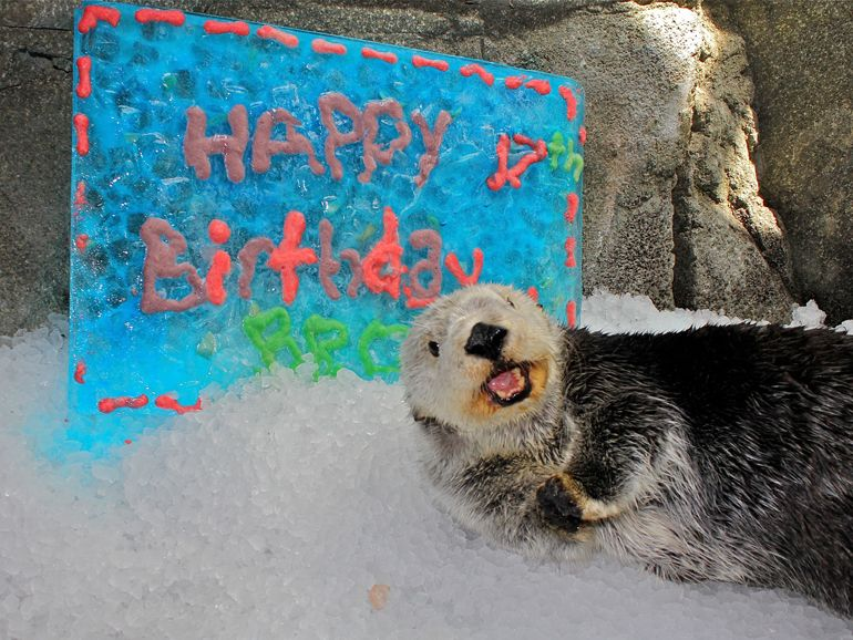 Brook the sea otter birthday