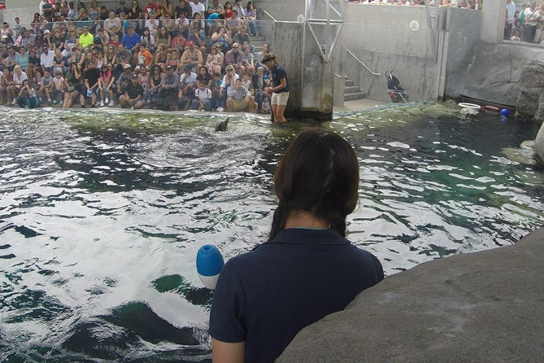 Cain the sea lion's A to B training