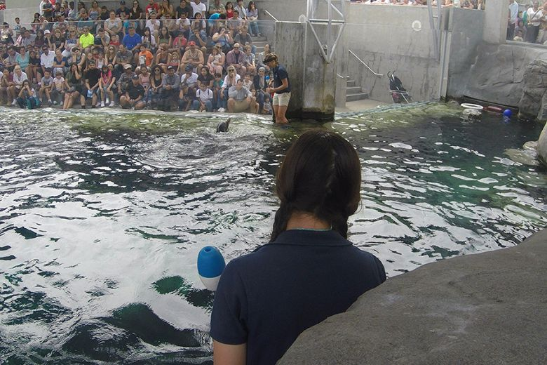 Cain the sea lion's A to B training - popup