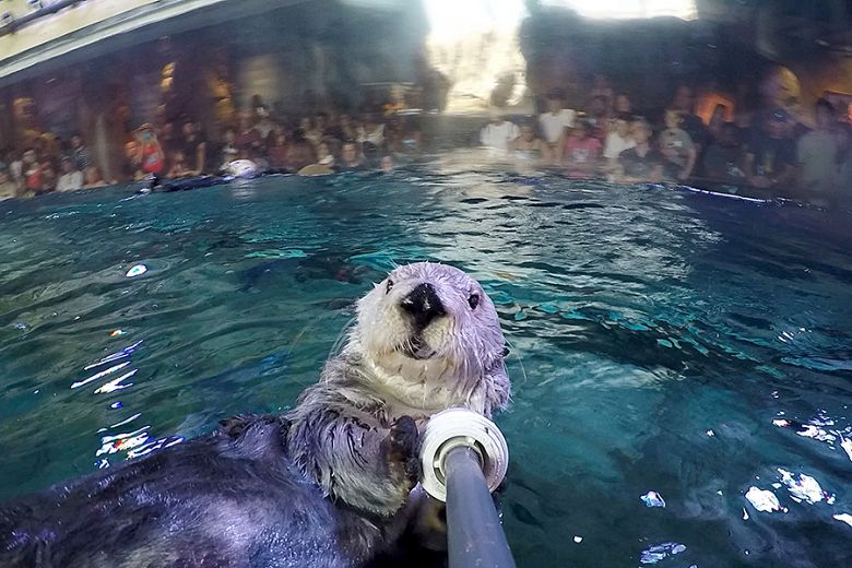 Charlie the otter's Summer 2018 Selfie - popup