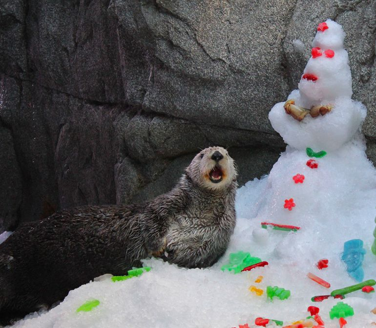 Charlie the otter with a snowman