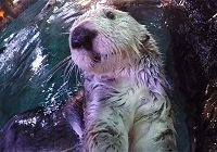 Charlie the Sea Otter's 20th Birthday