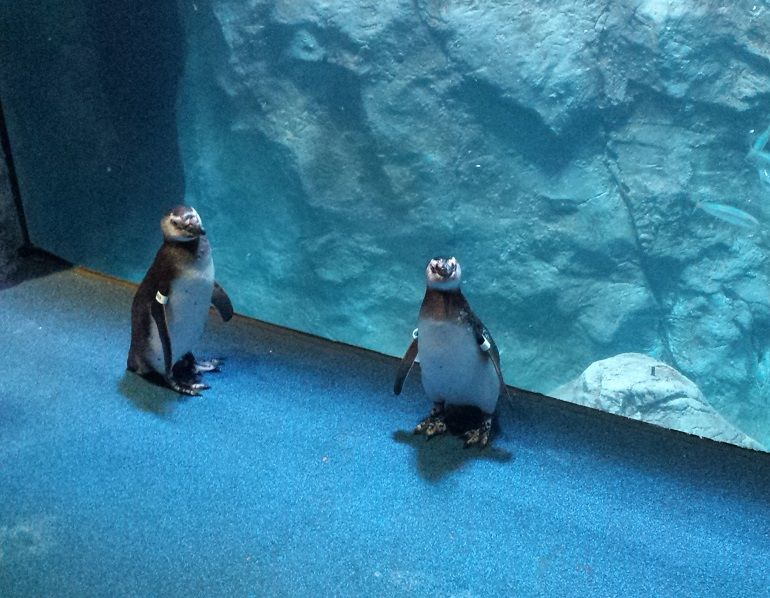 Curious Penguins