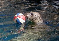 An Inspirational Vision-Impaired Seal