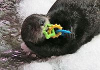 Otter Wish List