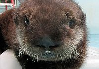 "Happy ""Otterdays"" from Ollie the Otter"