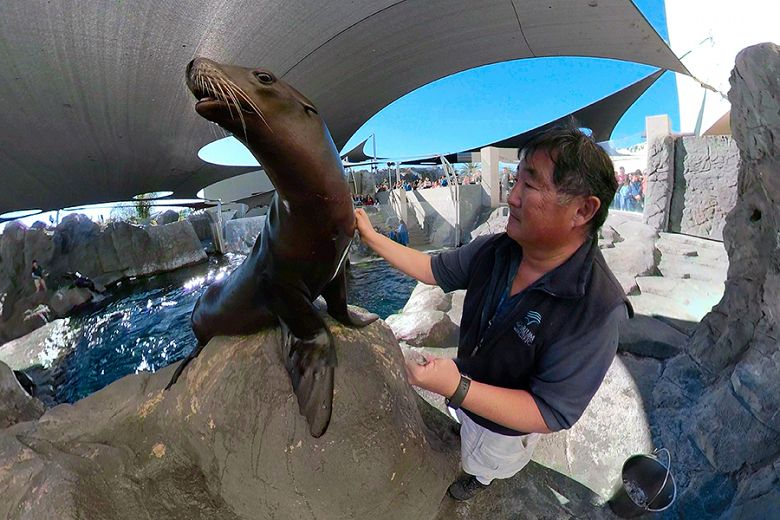 Hugh and Harpo the Sea Lion taken with a GoPro Fusion - popup