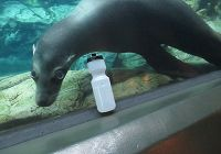 Harpo the Sea Lion's Tip about the Aquarium's Water Bottle Filling Station