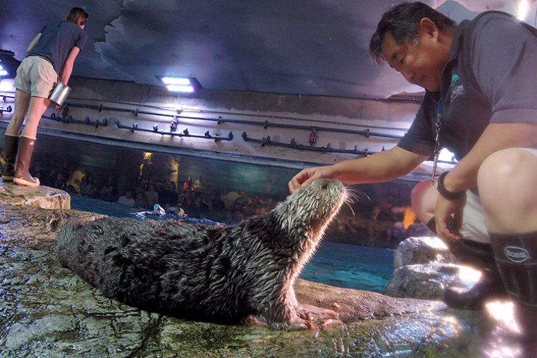 Volunteer Hugh and Charlie the otter - popup