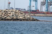 Large group of birds near protected area of the port - thumbnail