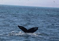 Humpbacks & Dolphins In The Area