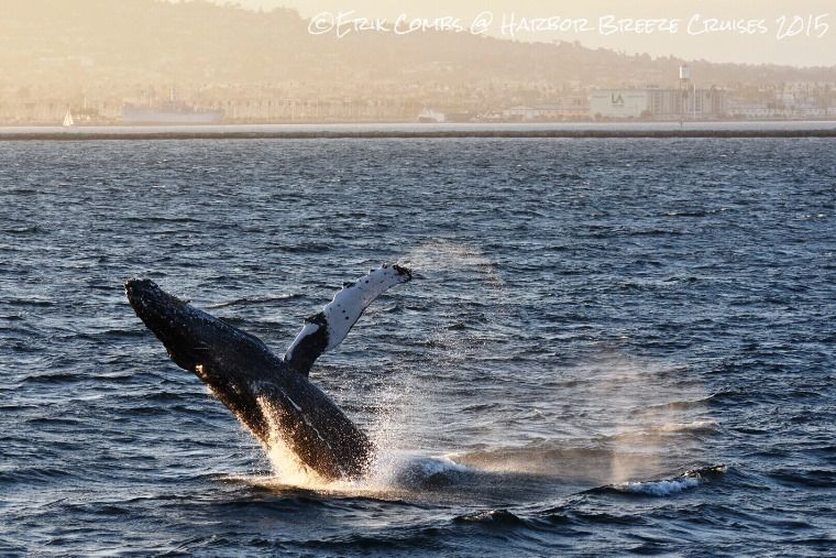 Humpbacks for Days!