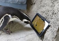 iPad-Playing Penguins